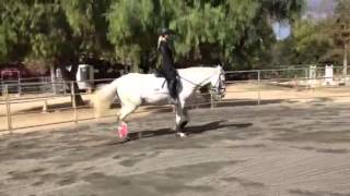 Tanya and Soleil: Recognizing The Working Trot