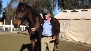 Horses That Spook: Teaching Relaxation