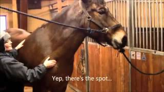 Video Critique: Tytti and Usko Submission 5 Lameness Exam