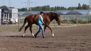 Art2Ride Associate Trainer Program: Yvon Hoogervorst Video Journal 2