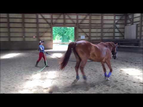 Art2Ride Associate Trainer Program: Cassie and Spirit Submission 1