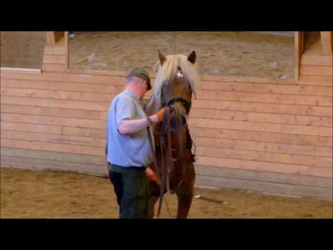 Video Journal: Art2Ride Associate Trainer Tytti Vanhala Presents Pöly Journal #22