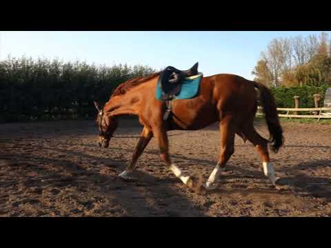 Art2Ride Associate Trainer Program: Yvon and Wilco: Lunging