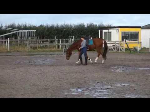 Art2Ride Associate Trainer Program: Yvon and Wilco: Work In Hand