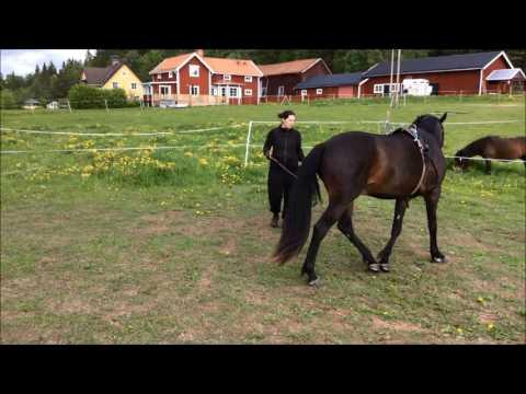 Art2Ride Associate Trainer Program: Emmeli annd Topas Video Journal #3