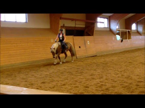 Video Journal: Art2Ride Associate Trainer Tytti Vanhala Presents Pöly Journal #20