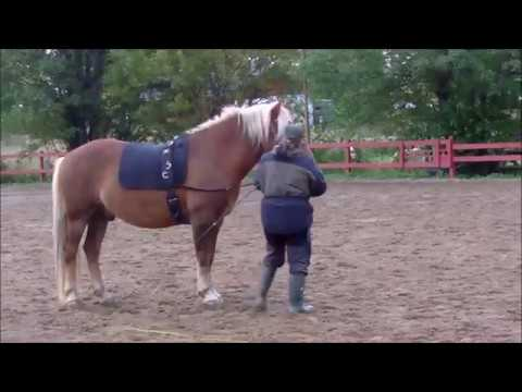 Art2Ride Associate Trainer Program: Tytti and Poly: Lunging Self Critique